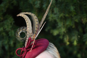 Zara Phillips Decorative Hat