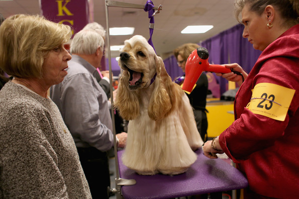 BEHOLD: Westminster Dogs Get Their Hair Done, Nails Done, Everything Did