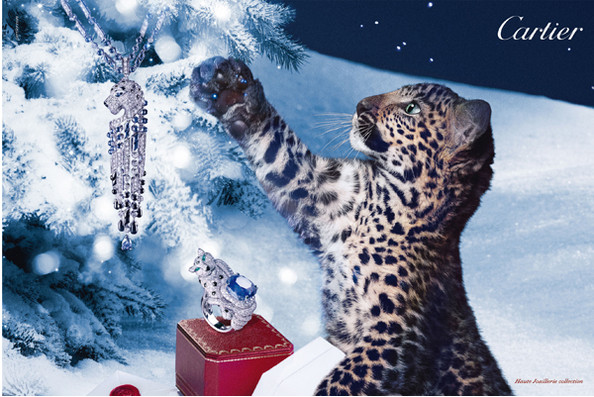 The Faces of Cartier's Winter Campaign: Baby Panthers!