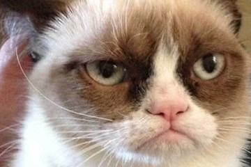 Watch Grumpy Cat Star in a Friskies Cat Staring Contest Commercial [VIDEO]