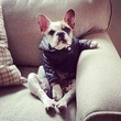 Karolina Kurkova Appreciates a Stylish Pup