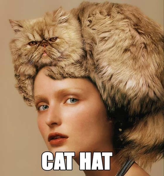 How to Wear Your Cat - Cat on Man's Head Spotted in the Wild (New York)